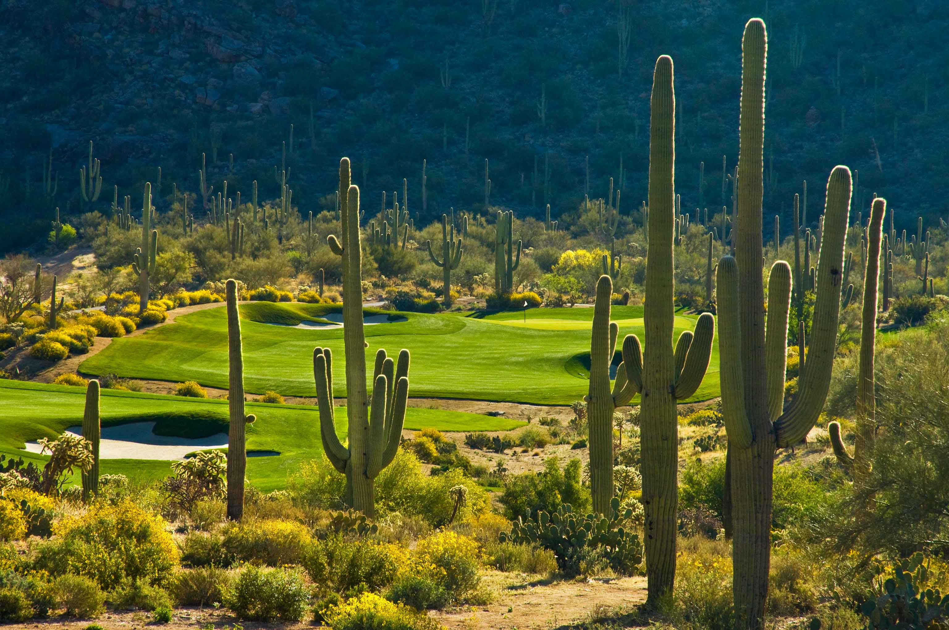 Tucson Golf-Dove Mountain